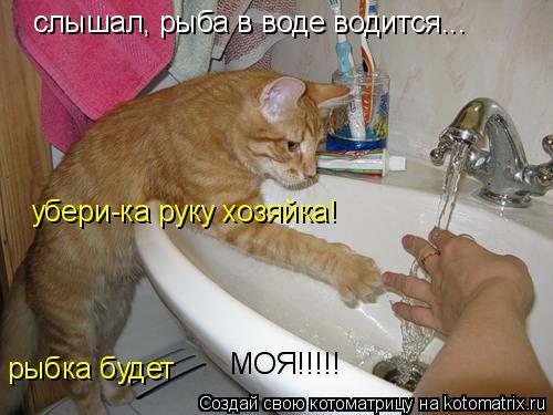 Котоматрица: слышал, рыба в воде водится... убери-ка руку хозяйка! рыбка будет  МОЯ!!!!!