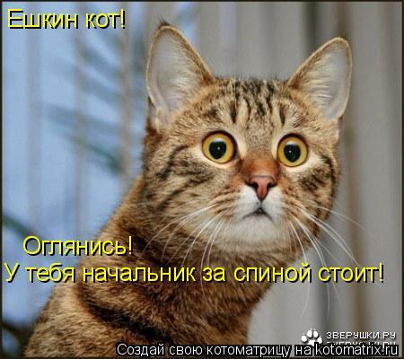 Котоматрица: Ешкин кот! Оглянись! У тебя начальник за спиной стоит!