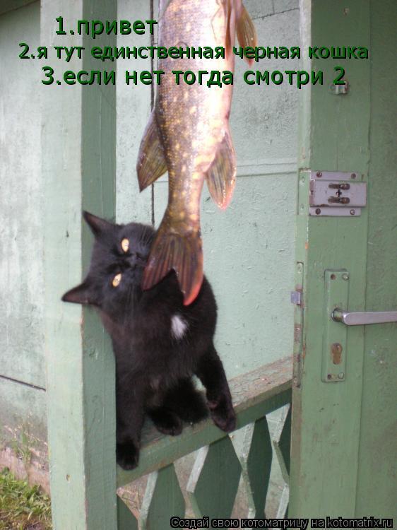 Котоматрица: 1.привет 2.я тут единственная черная кошка 3.если нет тогда смотри 2