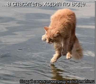 Котоматрица: ...а спаситель ходил по воде...