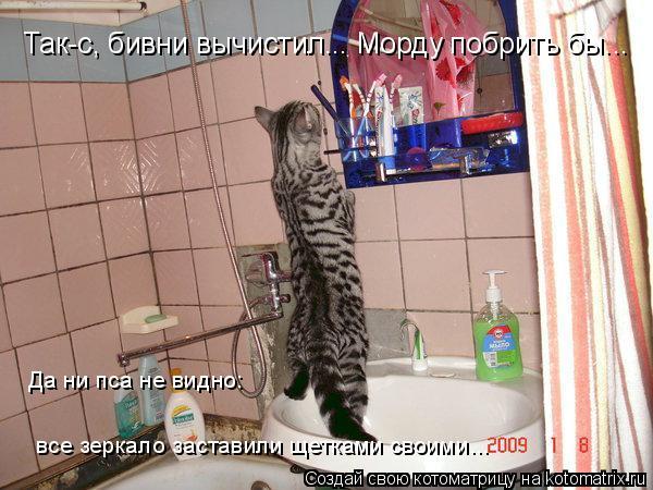 Котоматрица: Так-с, бивни вычистил... Морду побрить бы... все зеркало заставили щетками своими... Да ни пса не видно: