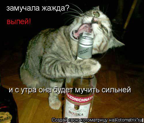 Котоматрица: замучала жажда? выпей! и с утра она будет мучить сильней