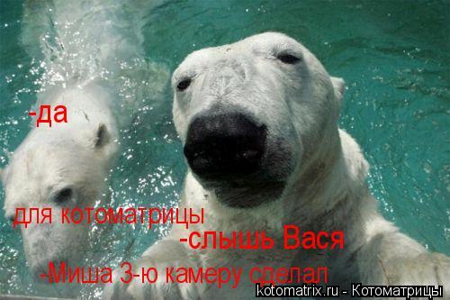 Котоматрица: -слышь Вася -да -Миша 3-ю камеру сделал для котоматрицы
