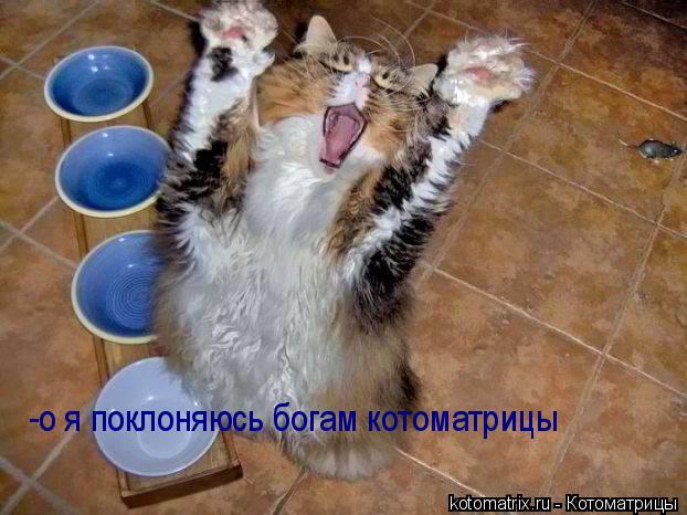 Котоматрица: -о я поклоняюсь богам котоматрицы