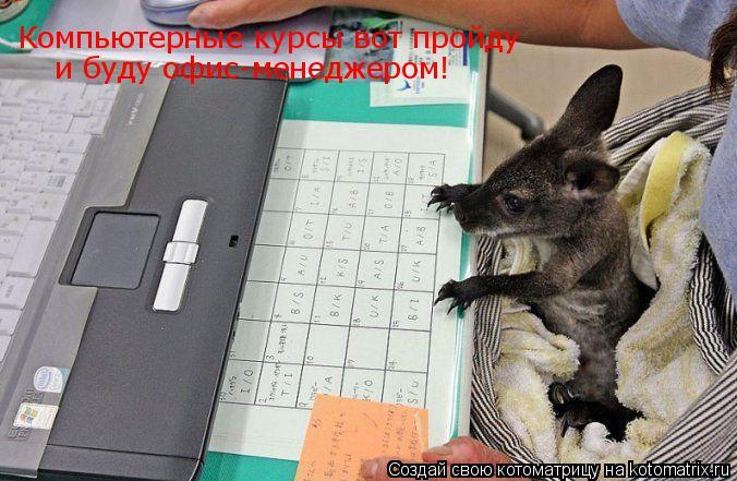 Котоматрица: Компьютерные курсы вот пройду  и буду офис-менеджером!
