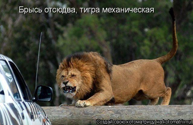 Котоматрица: Брысь отсюдва, тигра механическая