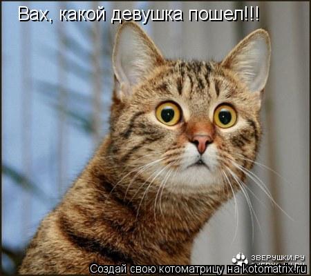 Котоматрица: Вах, какой девушка пошел!!!