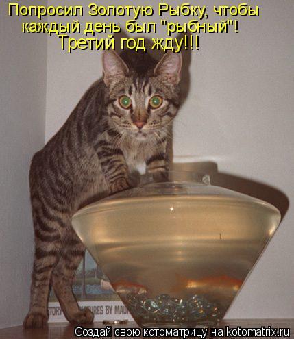 """Котоматрица: Попросил Золотую Рыбку, чтобы каждый день был """"рыбный""""! Третий год жду!!!"""