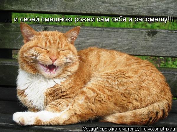 Котоматрица: ... и своей смешною рожей сам себя и рассмешу!!!