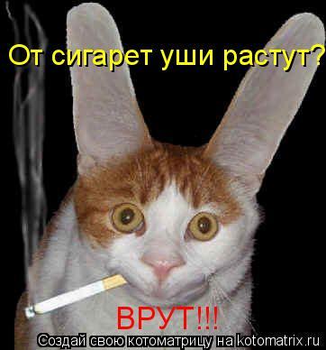 Котоматрица: От сигарет уши растут? ВРУТ!!!