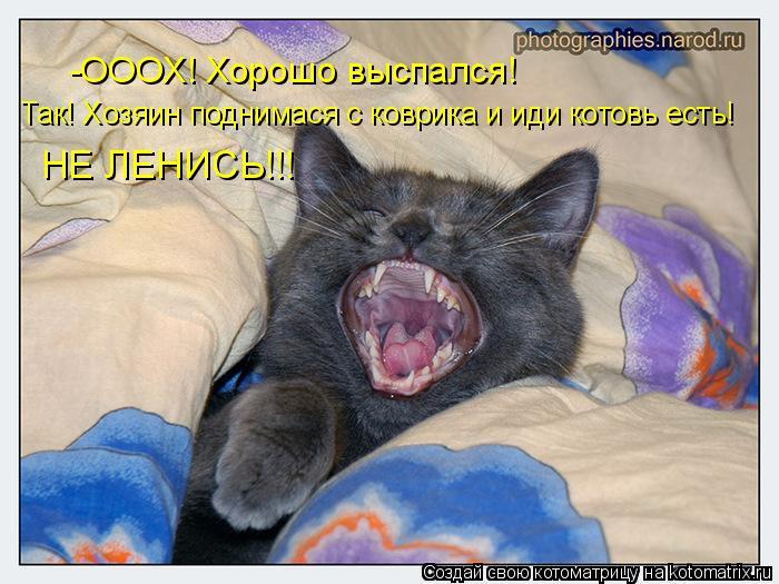 Котоматрица: -ОООХ! Хорошо выспался! Так! Хозяин поднимася с коврика и иди котовь есть! НЕ ЛЕНИСЬ!!!