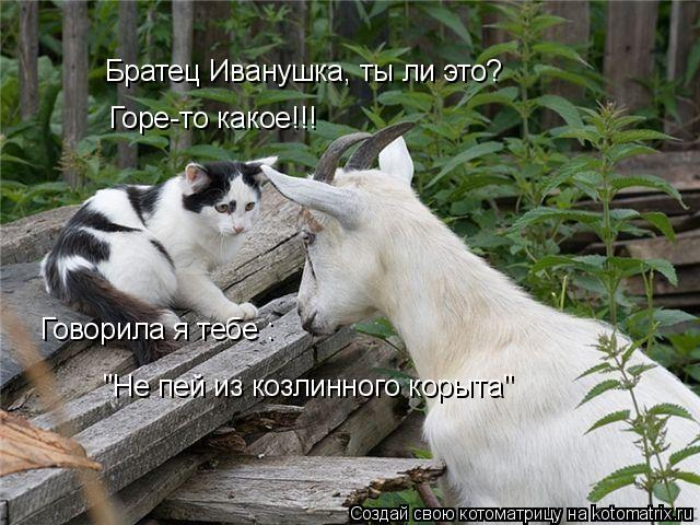 """Котоматрица: Братец Иванушка, ты ли это? Горе-то какое!!! Говорила я тебе :  """"Не пей из козлинного корыта"""""""