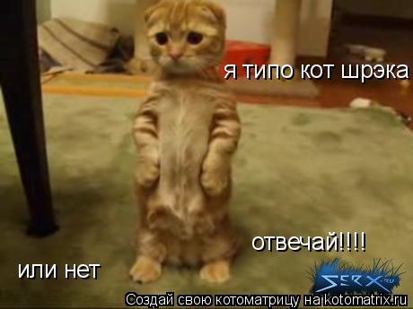 Котоматрица: я типо кот шрэка или нет отвечай!!!!