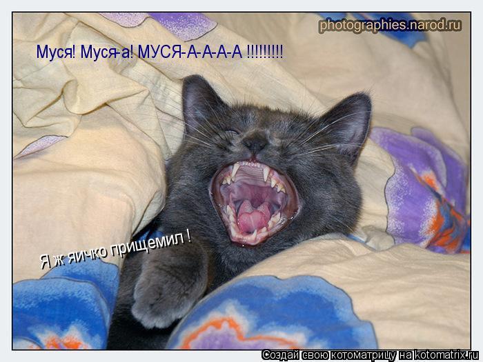 Котоматрица: Муся! Муся-а! МУСЯ-А-А-А-А !!!!!!!!!  Я ж яичко прищемил !