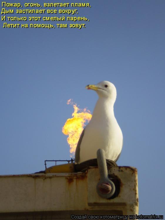 Котоматрица: Пожар, огонь, взлетает пламя,  Дым застилает все вокруг,  И только этот смелый парень,  Летит на помощь, там зовут.