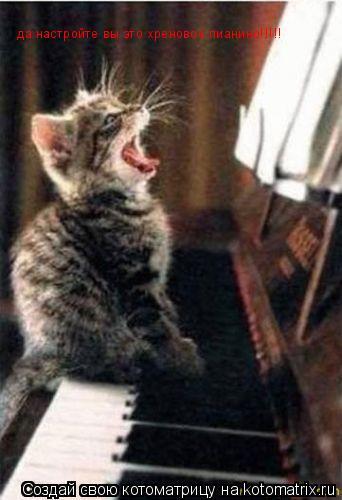 Котоматрица: да настройте вы это хреновое пианино!!!!!