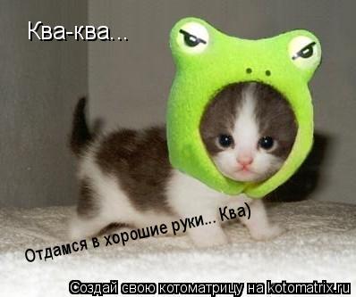 Котоматрица: Ква-ква...  Ква-ква...  Отдамся в хорошие руки... Ква)