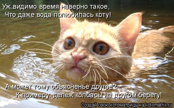 Котоматрица: Уж видимо время наверно такое, Что даже вода полюбилась коту! А может тому объясненье другое? К примеру: дележ колбасы на другом берегу!