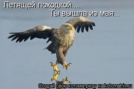 Котоматрица: Летящей походкой..... Ты вышла из мая...