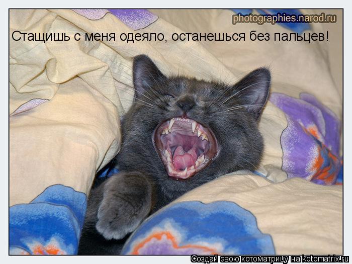 Котоматрица: Стащишь с меня одеяло, останешься без пальцев!