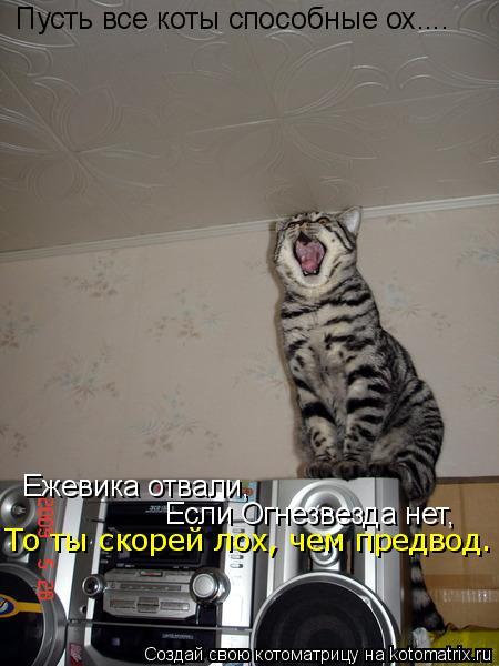 Котоматрица: Пусть все коты способные ох.... Ежевика отвали, Если огнезвезда нет.  Если Огнезвезда нет, То ты скорей лох, чем предвод.