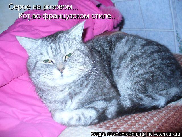 Котоматрица: Серое на розовом... Кот во французском стиле...