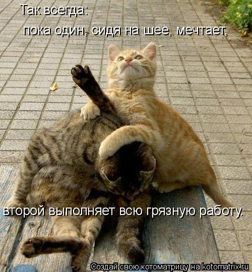 Котоматрица: Так всегда: пока один, сидя на шее, мечтает, второй выполняет всю грязную работу.