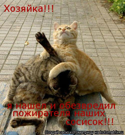 Котоматрица: Хозяйка!!! я нашел и обезвредил пожирателя наших сосисок!!!