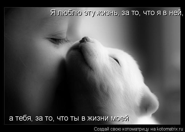Котоматрица: Я люблю эту жизнь, за то, что я в ней, а тебя, за то, что ты в жизни моей  а тебя, за то, что ты в жизни моей