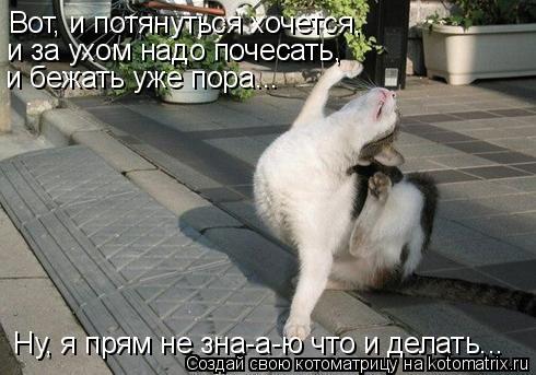 Котоматрица: Вот, и потянуться хочется,  и за ухом надо почесать,  и бежать уже пора...  Ну, я прям не зна-а-ю что и делать...