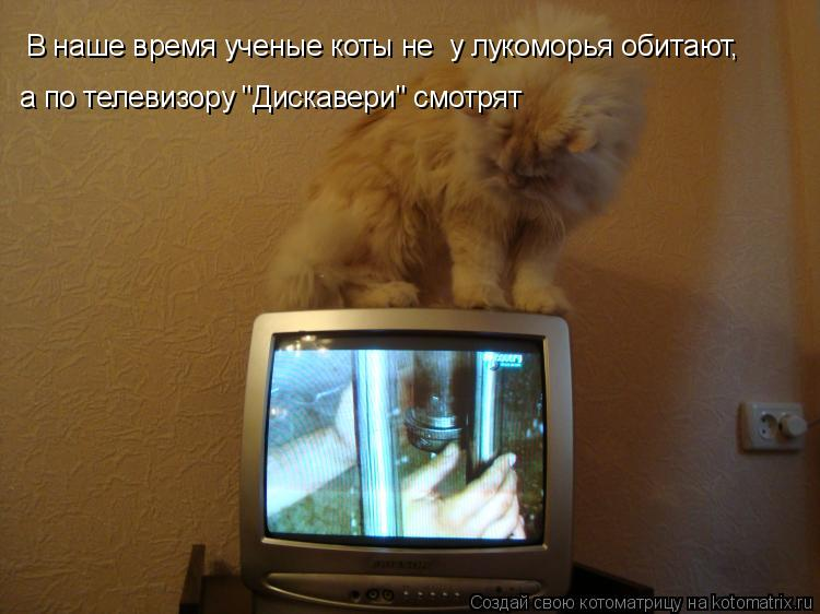 """Котоматрица: В наше время ученые коты не  у лукоморья обитают, а по телевизору """"Дискавери"""" смотрят"""