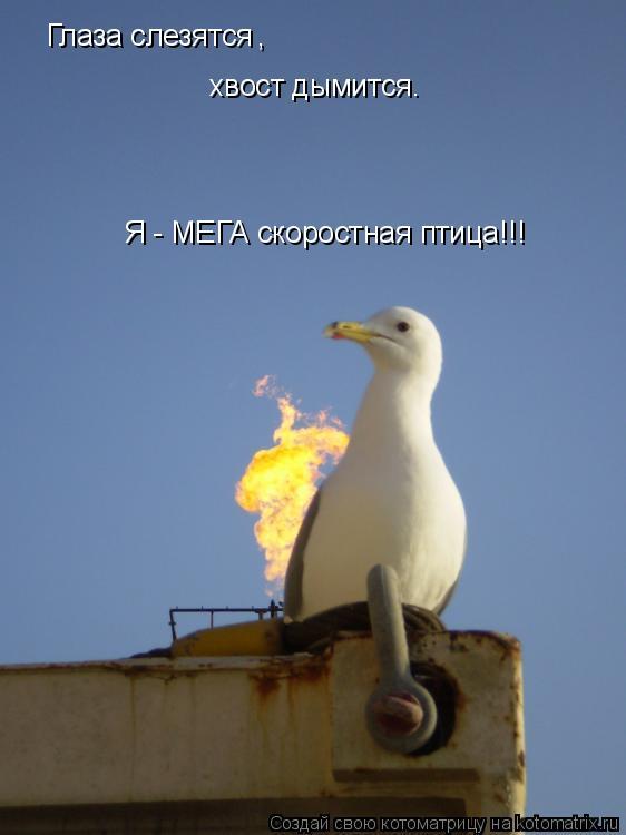Котоматрица: Глаза слезятся , хвост дымится. Я - МЕГА скоростная птица!!!