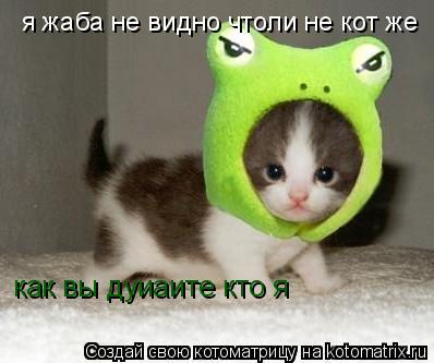 Котоматрица: как вы дуиаите кто я я жаба не видно чтоли не кот же