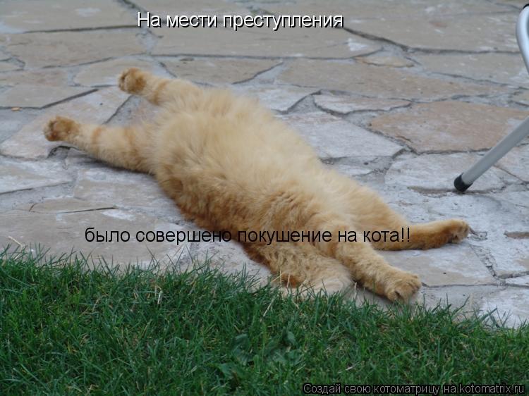 Котоматрица: На мести преступления было совершено покушение на кота!!