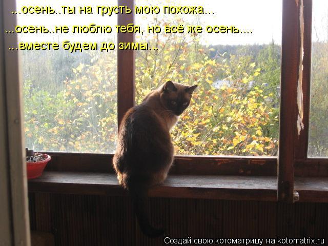 Котоматрица: ...осень..ты на грусть мою похожа... ...осень..не люблю тебя, но всё же осень.... ...вместе будем до зимы...