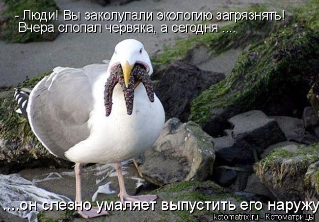 Котоматрица: - Люди! Вы заколупали экологию загрязнять! Вчера слопал червяка, а сегодня .... ....он слезно умаляет выпустить его наружу!