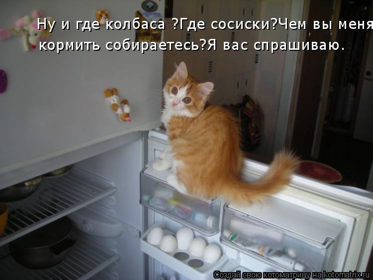 Котоматрица: Ну и где колбаса ?Где сосиски?Чем вы меня кормить собираетесь?Я вас спрашиваю. кормить собираетесь?Я вас спрашиваю.