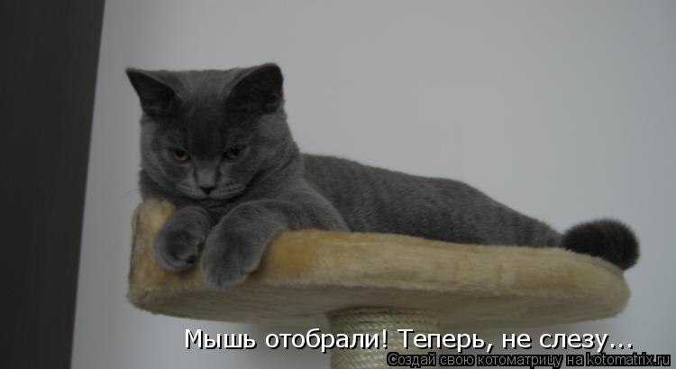 Котоматрица: Мышь отобрали! Теперь, не слезу...