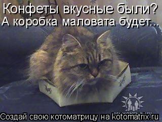 Котоматрица: Конфеты вкусные были? А коробка маловата будет...