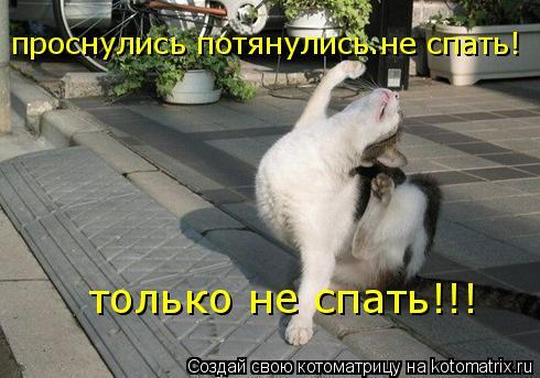 Котоматрица: проснулись потянулись.не спать! только не спать!!!