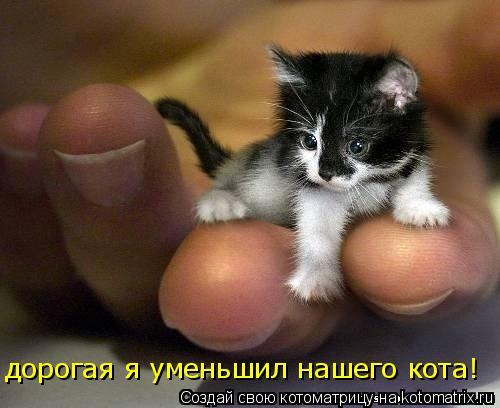 Котоматрица: дорогая я уменьшил нашего кота!