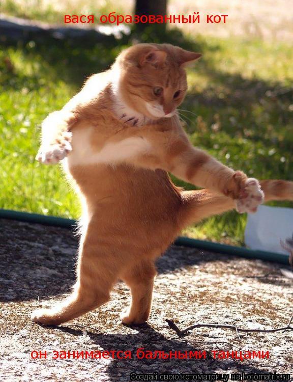 Котоматрица: вася образованный кот  он занимается бальными танцами