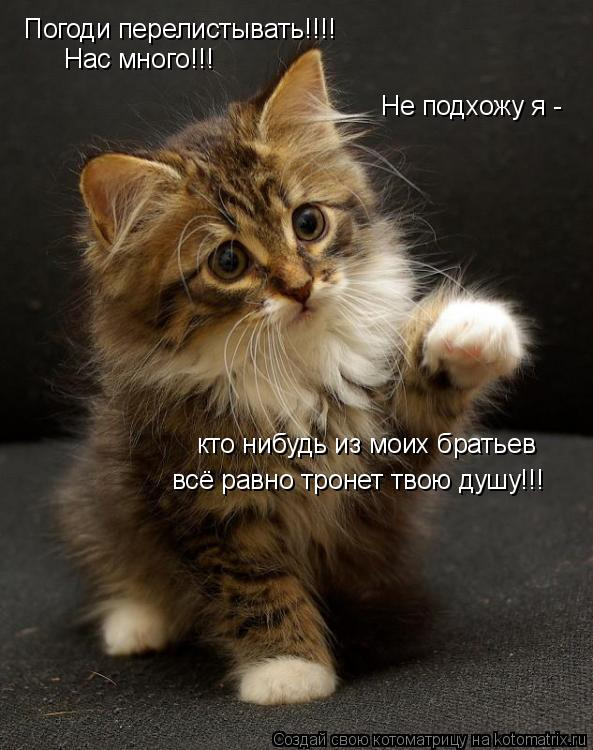 http://kotomatrix.ru/images/lolz/2009/08/07/336497.jpg