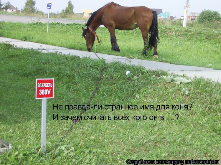 Котоматрица: Не правда-ли странное имя для коня? И зачем считать всех кого он в.....?