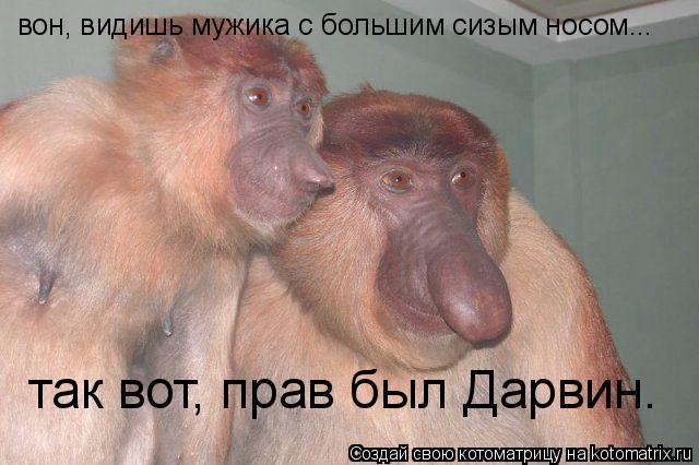 Котоматрица: вон, видишь мужика с большим сизым носом... так вот, прав был Дарвин.