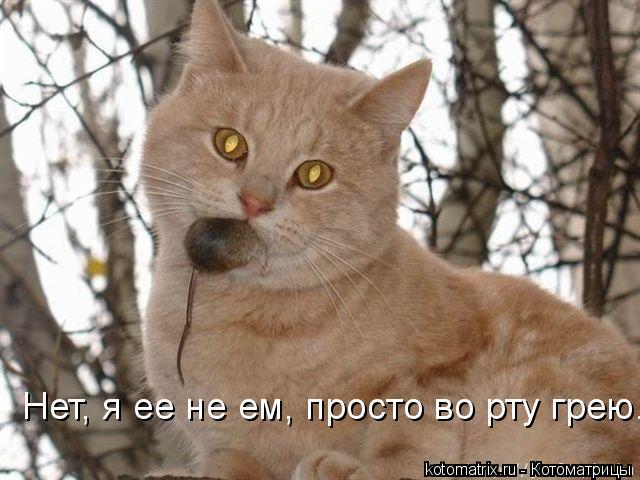 Котоматрица: Нет, я ее не ем, просто во рту грею.