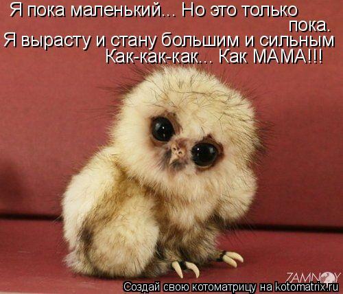 Котоматрица: Я пока маленький... Но это только пока. Я вырасту и стану большим и сильным Как-как-как... Как МАМА!!!