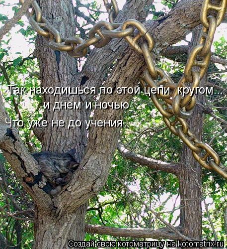 Котоматрица: Так находишься по этой цепи  кругом... и днём и ночью Что уже не до учения.