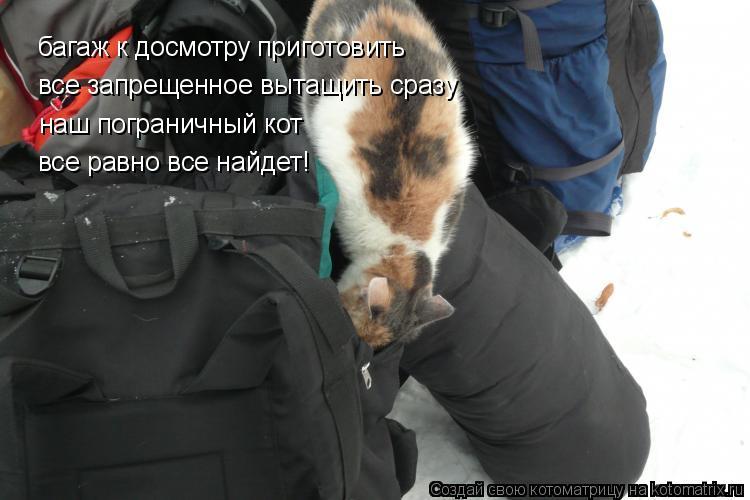 Котоматрица: багаж к досмотру приготовить все запрещенное вытащить сразу наш пограничный кот  все равно все найдет!
