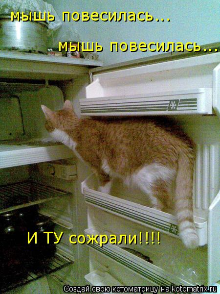 Котоматрица: мышь повесилась... мышь повесилась... И ТУ сожрали!!!!